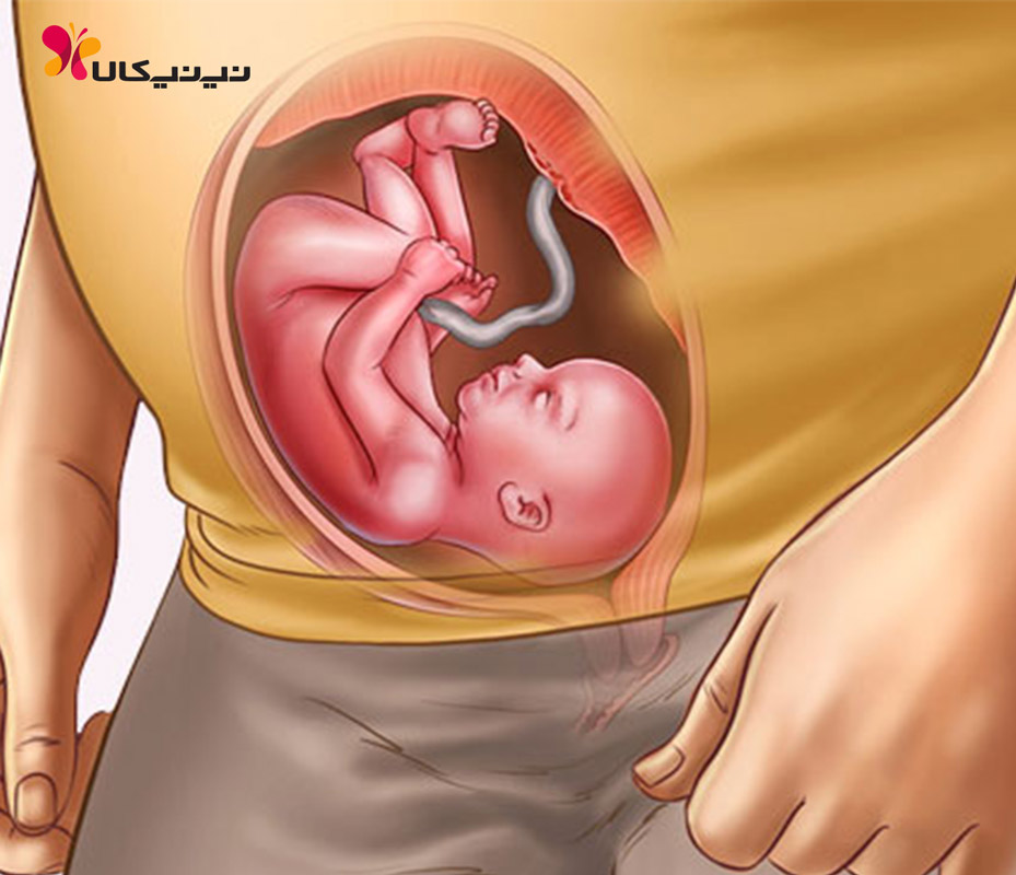 هفته بیست و سوم بارداری