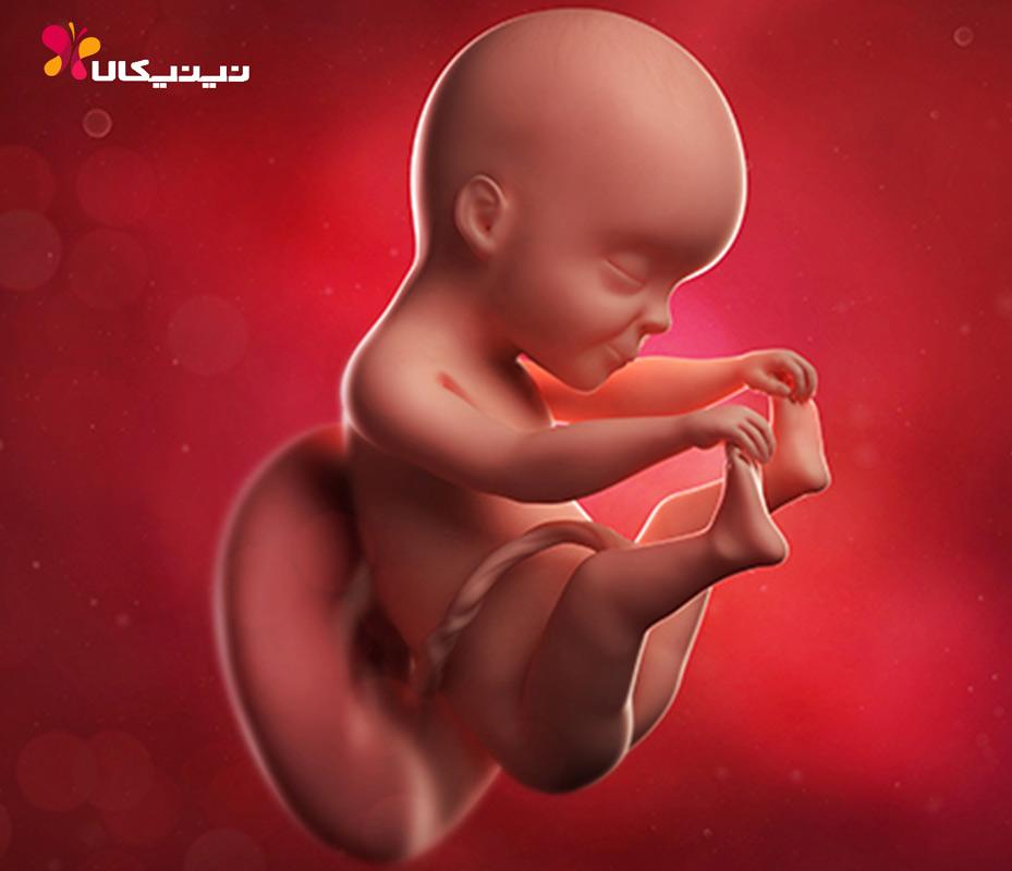 هفته بیست و پنجم بارداری
