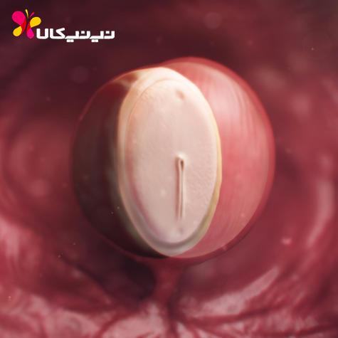 وضعیت جنین در هفته 4 بارداری