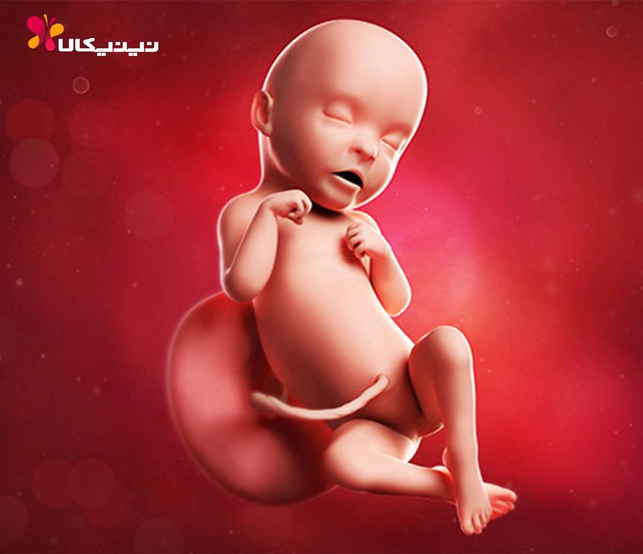 هفته سی و یکم بارداری